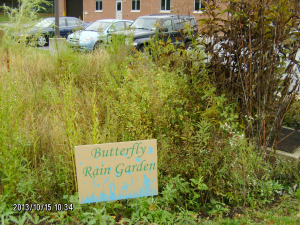 Butterfly Rain Garden: form treating stormwater from upper parking lot & parts of Graffius Rd.