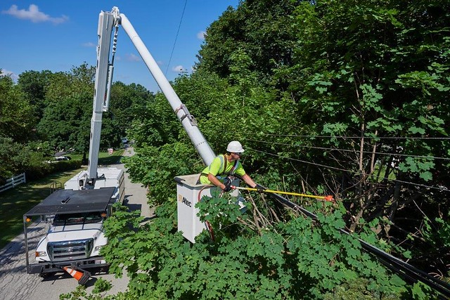 Picture of a man wearing safety yellow and a hard hat standing inside a bucket lift to trim a green-leaved tree.